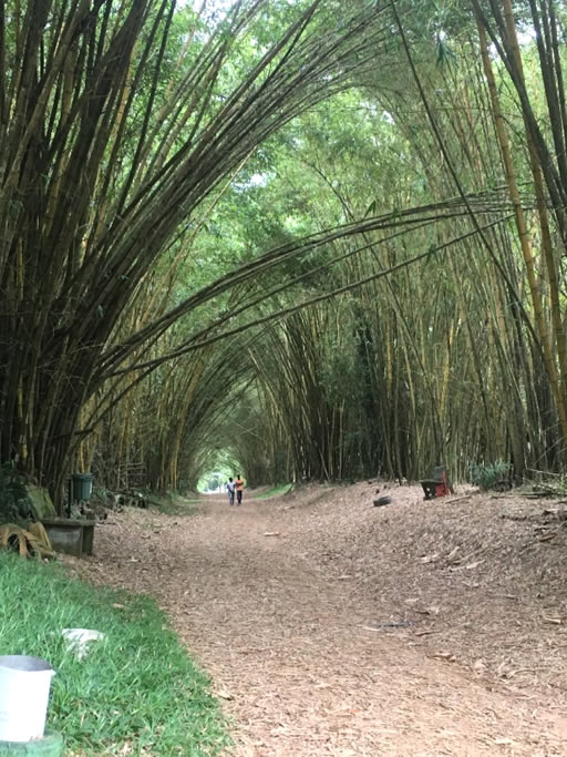 Bingerville Botanical Gardens
